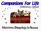 Companions for Life Pet Rescue