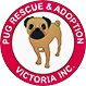 Pug Rescue & Adoption Victoria