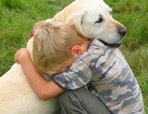 Importance of Pet Insurance in Australia