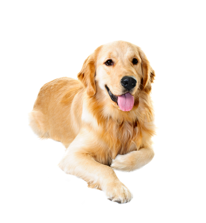 What The Best Dog Food For Labrador Retrievers