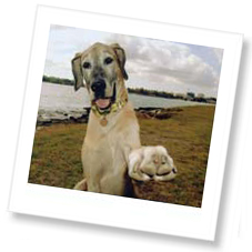 How pet insurance helped when Daisy got cancer