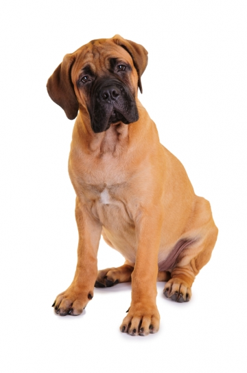 Can large dogs live in small spaces?
