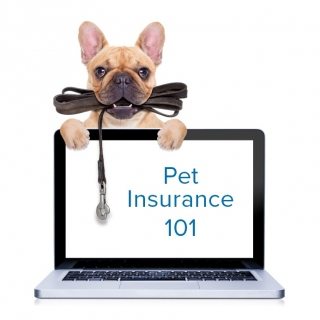 Pet Insurance: Myths