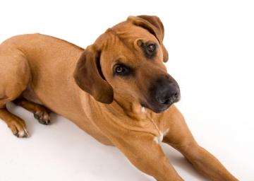 Dog Breeds From Zimbabwe