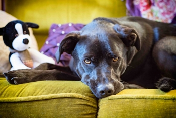 Tips for welcoming a foster dog
