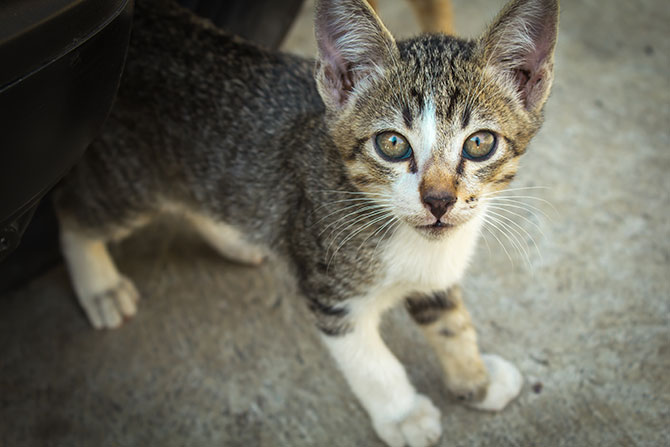 Tips for Socialising Feral Kittens