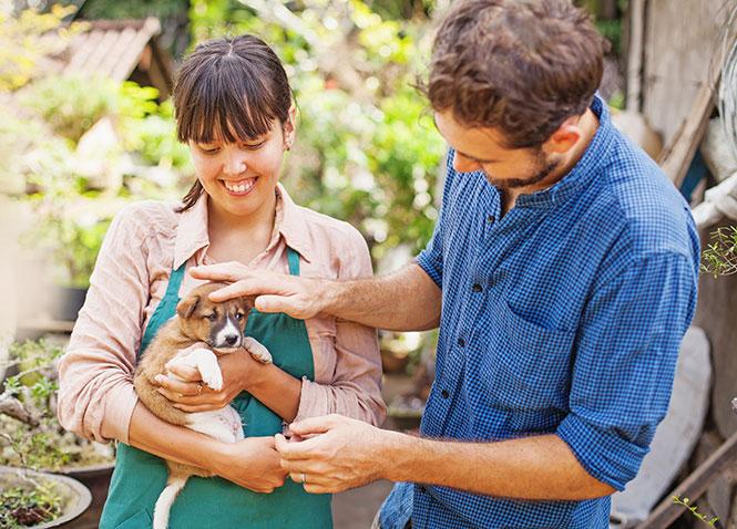 Is a pet a good gift idea?