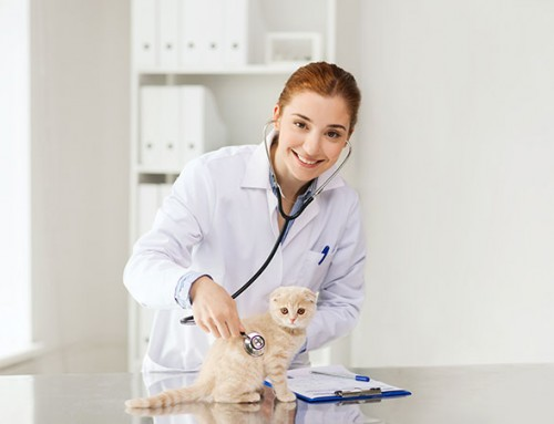 Pet Insurance in Australia Explained