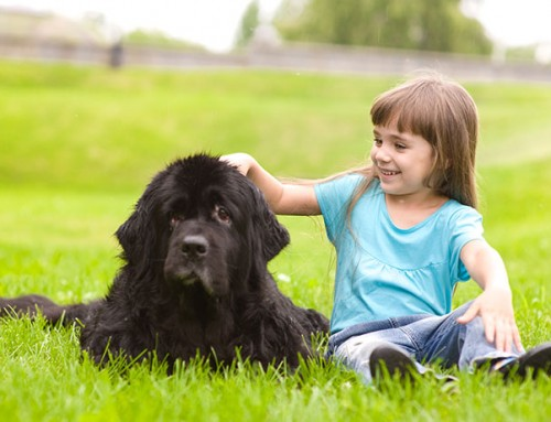 Dog Breed Series Part 4: 10 Kid Friendly Dogs