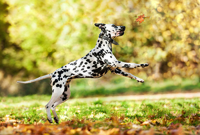 Dog Breed Series Part 3: High Energy Dog Breeds