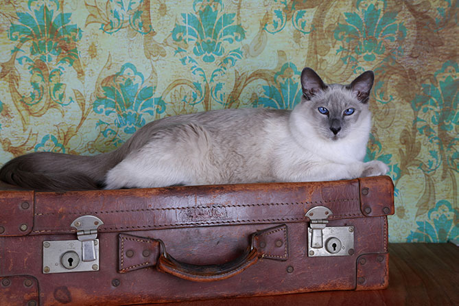 Travel safely with your cat