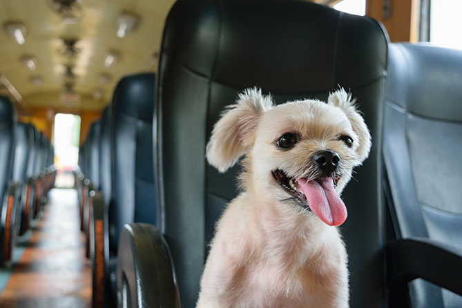 Pets On Holiday Series Part 4 Pet Friendly Airlines Trains And