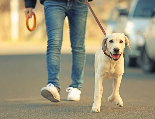 8 Easy Tips for Walking an Energetic Dog