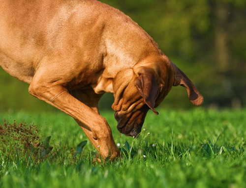 Dog Backyards Series – Part 1: How To Stop Your Dog From Digging Holes In Your Yard