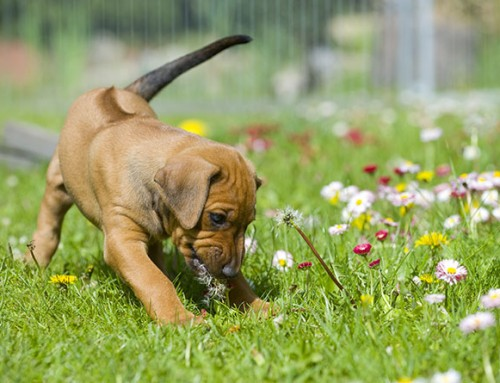 How to Avoid your Dog behaving badly
