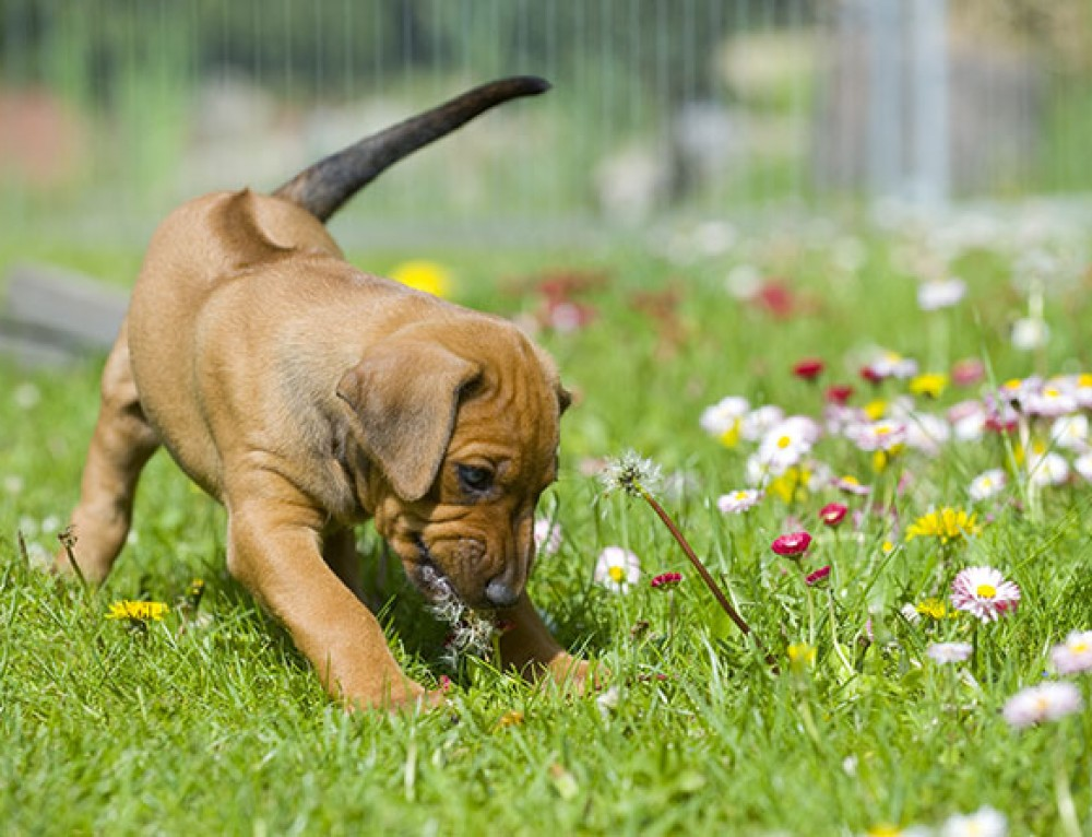 7 Top Tips to avoid your dog behaving badly