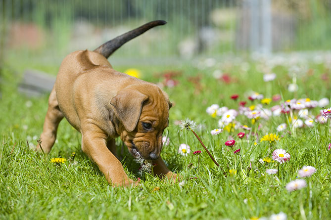 Tips to avoid your dog behaving badly
