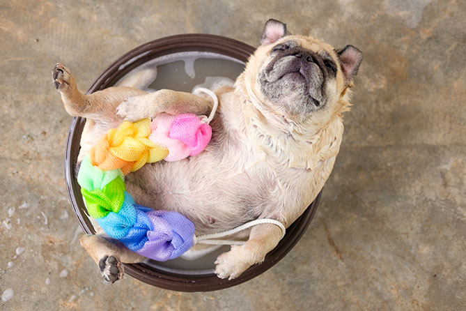 How Often Should You Be Washing Your Dog?