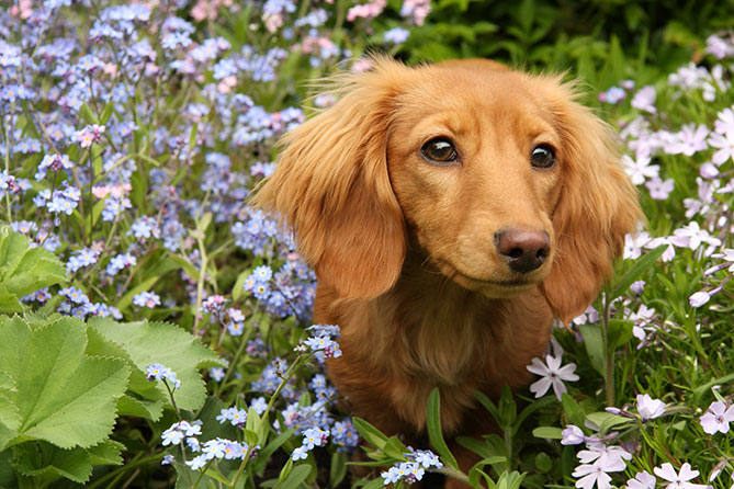 dog backyards series part 3 dog friendly plants your pooch will love - Are Christmas Cactus Poisonous To Dogs
