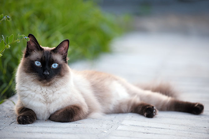 Which Breed Of Cat Is Best Suited To Your Family