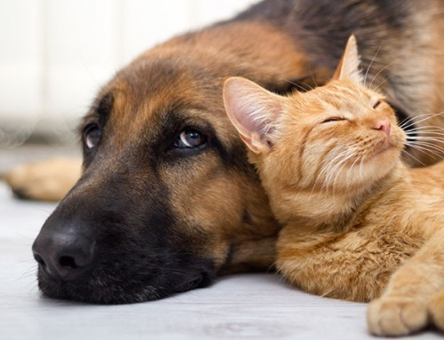 How to Ensure Your Dog and Cat Get Along