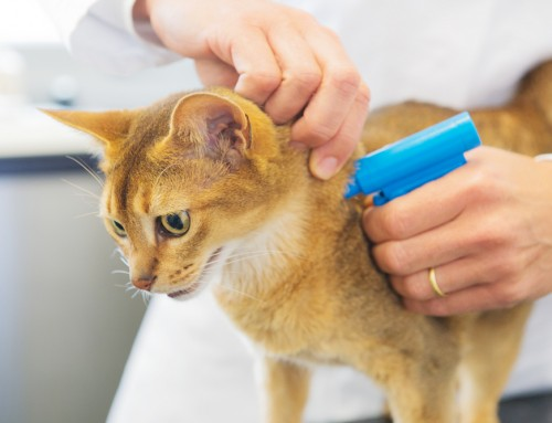 10 Reasons Why You Should Get Your Cat or Dog Microchipped