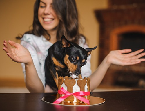 6 Healthy Dog Treat Recipes for Valentine's Day