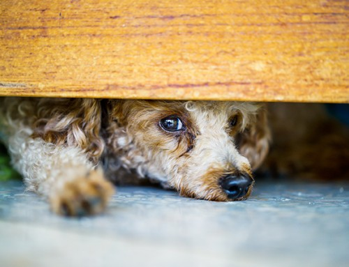 What to Do If You Suspect Animal Cruelty