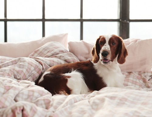 A Guide to Keeping Your Home Free from Dog Smells