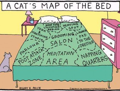 4 Tips to keep your cat in his bed
