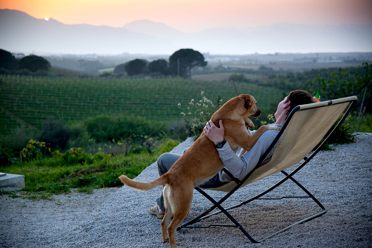 PetSecure - The Top Pet Friendly Holiday Destinations in Victoria