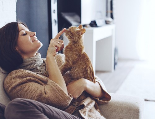 A Guide to Kitten-Proofing Your House