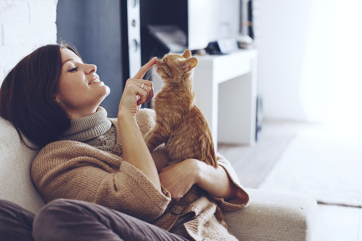 Petsecure - A Guide to Kitten-Proofing Your House