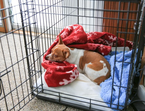 A How-To Guide for Crate Training Your Dog