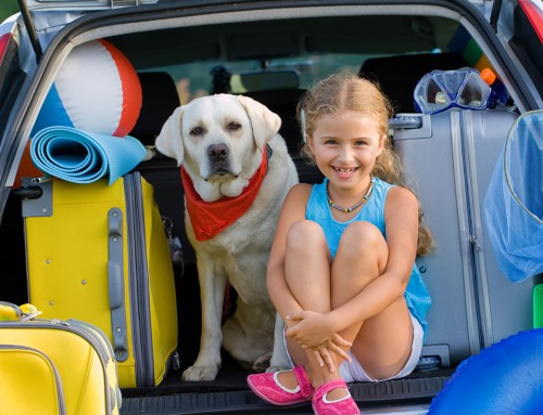 The Best Pet-Friendly Holiday Destinations in Western Australia