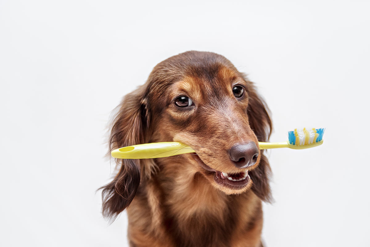petsecure - Essential Tips for Looking After Your Pet's Teeth and Gums