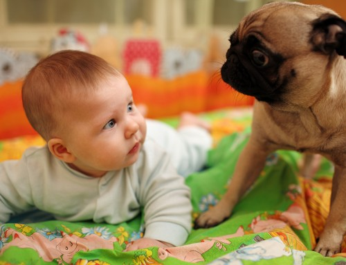 How to Safely Introduce your Newborn Baby to Your Pet