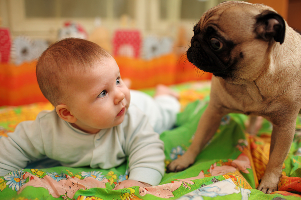 petsecure - How to Safely Introduce your Newborn Baby to Your Pet
