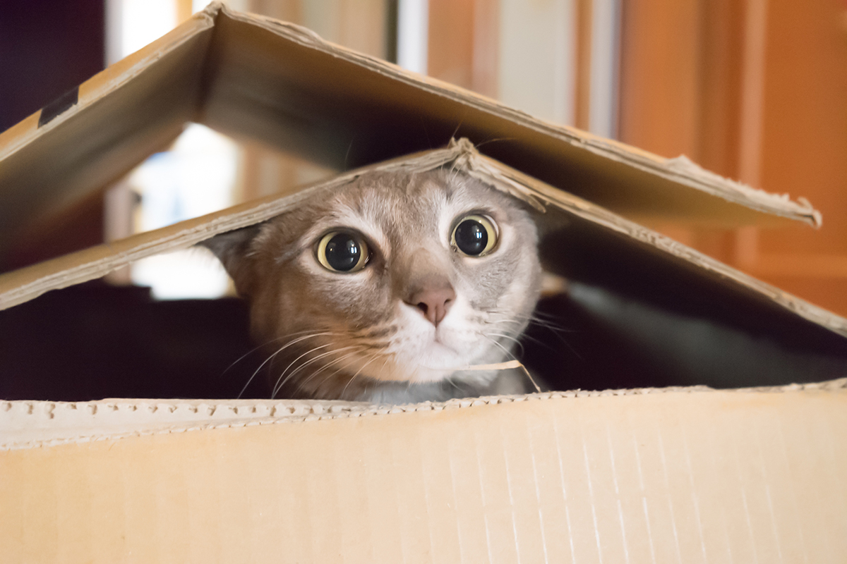 PetSecure - 10 Ways to Keep Your Cat Entertained While You're Out of the House