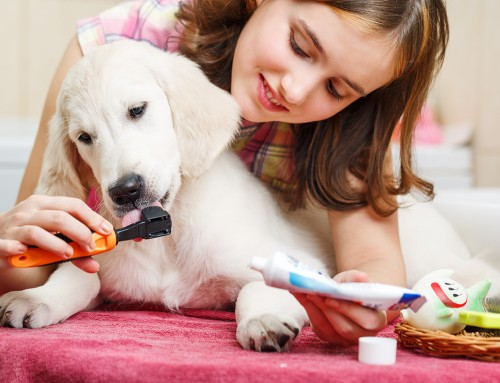 Doggy Healthcare: Things You Can Do to Improve Your Dog's Quality of Life