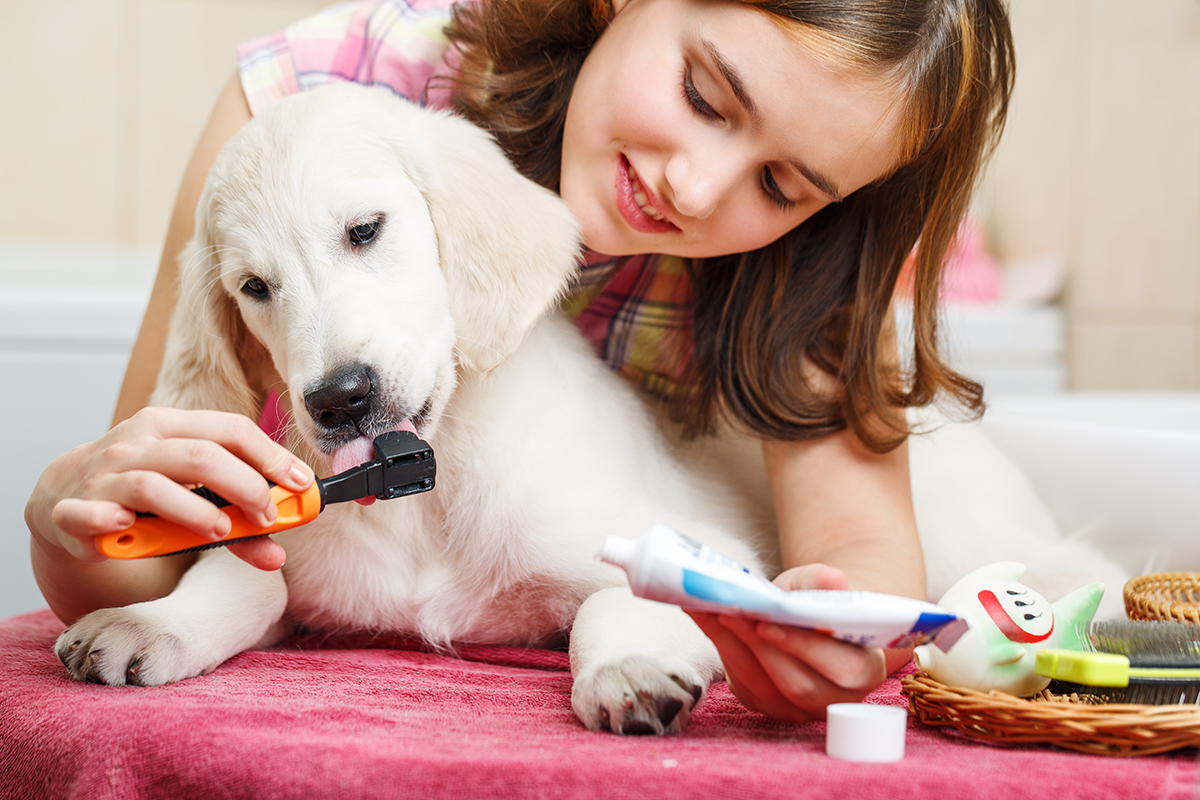 PetSecure - Doggy Healthcare Things You Can Do to Improve Your Dog's Quality of Life