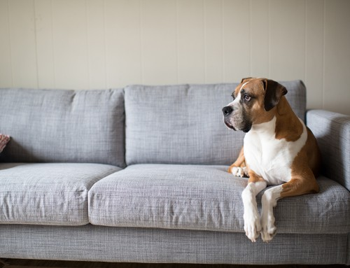 10 Ways to Keep Your Dog Entertained When You're Out of the House