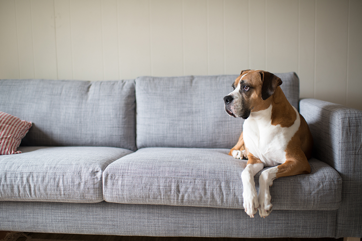 PetSecure - 10 Ways to Keep Your Dog Entertained
