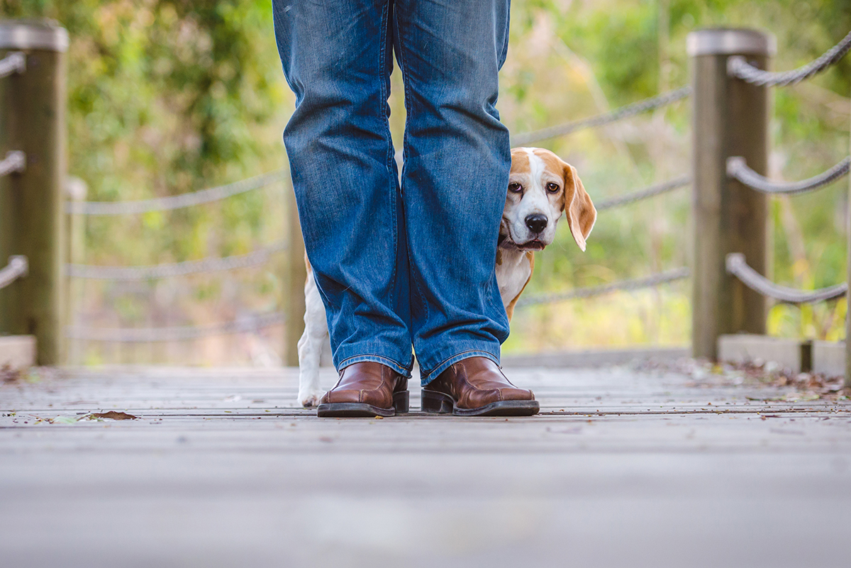 What to Do If Your Dog is Attacked in Public