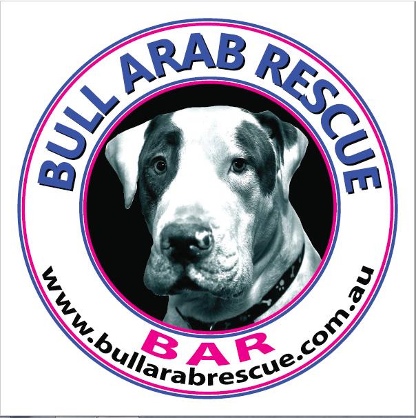 Bull Arab Rescue