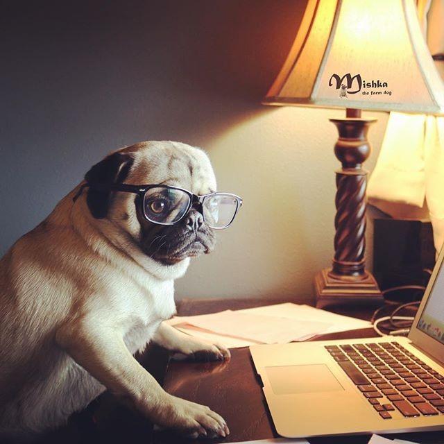 Choosing pet insurance