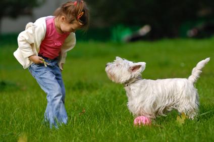 Young child training dog