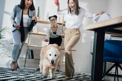 Dog in office with 3 young women