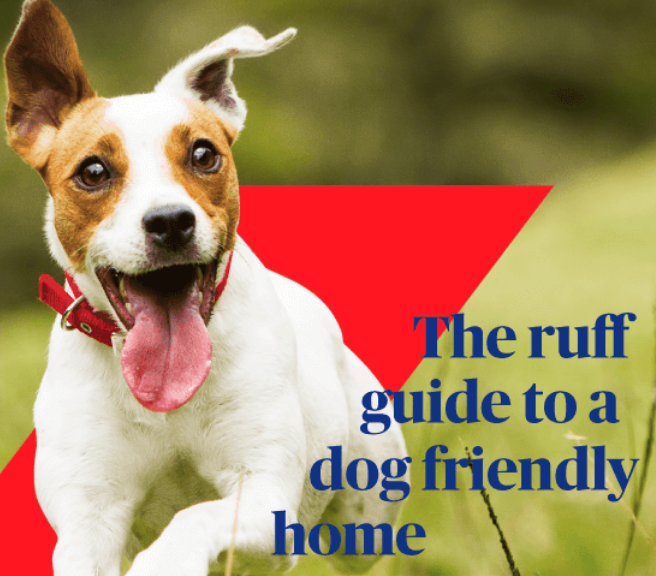 Creating a Dog Friendly Home
