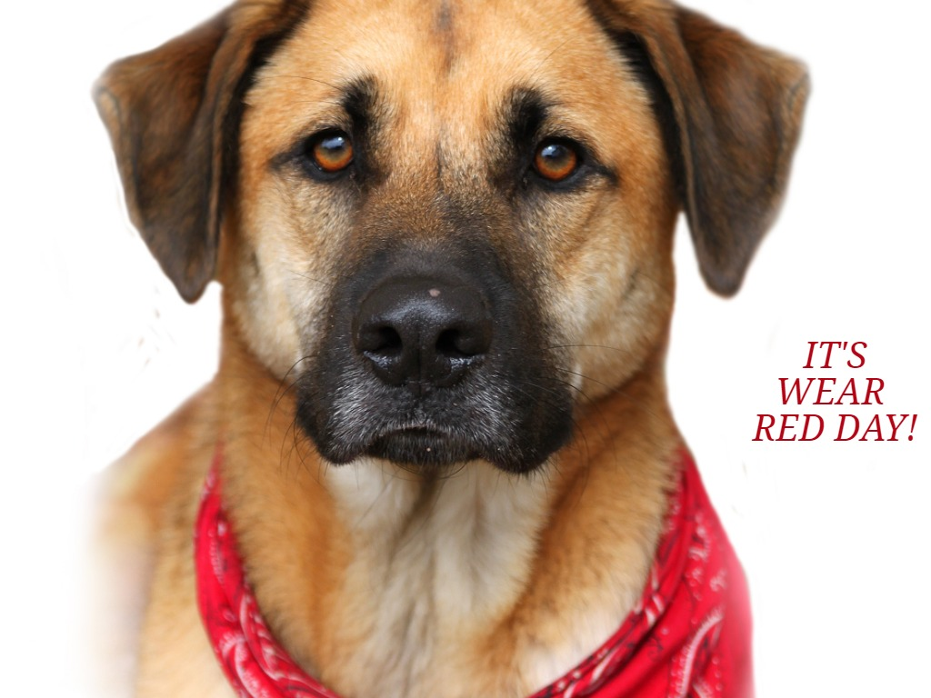 Dog wearing red bandanna